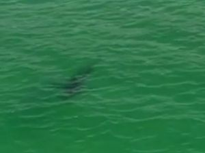 A 4-metre shark spotted by Channel 9 News helicopter at Wategos Beach, Byron Bay. Photo Contributed