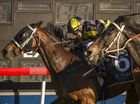 Hot favourite Darci Magic leaves run too late as Kurtley steals South Grafton Cup
