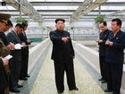 THE manager of a terrapin farm in North Korea has reportedly been executed for failing to adequately supply the animals' tanks with enough food and water.