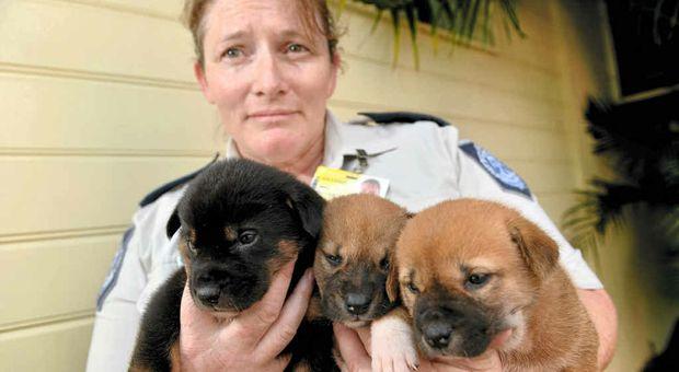 Rspca Dogs For Sale Sunshine Coast