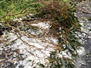 Heavy hail hits the Bunya Mountains