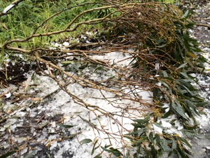 Heavy hail hits the Bunya Mountains