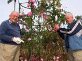 WINTER is a dormant time in most gardens, but if there's one good reason to and head out to your patch at this time of year, it would have to be rose pruning.