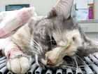 A HERVEY Bay woman has told of the moment her cat was put to sleep after it was allegedly left seriously injured when caught in an illegal rabbit trap.