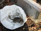 FIRE, feral cats and disease are causing an alarming decline in small native mammals in the Top End.