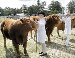 Farm Fantastic draws a crowd