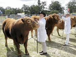 MOO TIME: Maleny State High students Cynthia Foster-Jones, Tamara Forsdike, Gena Cooper and Natasha Pedlow.