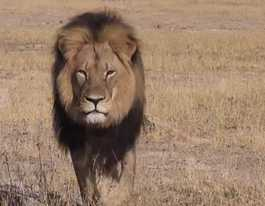 Cecil the Lion hunter identified as US dentist