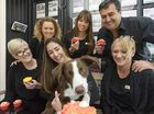 "A LOVE of their own ""fur-babies"" and an appreciation of the work the RSPCA does prompted the team at LJ Hooker Yamba to join in a pet-friendly Cupcake Day."