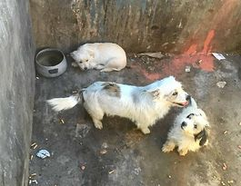 New start for poor pups abandoned in Ballandean dumpster