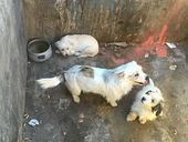 THREE abandoned dogs stole the hearts of many after they were found in an industrial bin at Council's Ballandean Transfer Station.