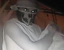 Stolen Currumbin echidna found safe and well