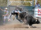 Bucking bulls to visit for Futurity and Classic Bull Ride