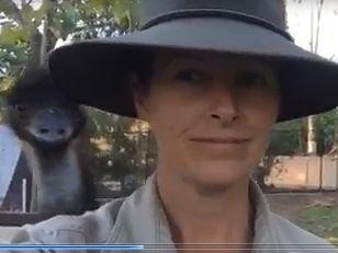 Emu photobombs Rockhampton zookeeper