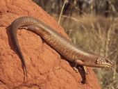 THE Federal Environment Minister has been forced to rethink the Carmichael coal mine project after a court finds vulnerable reptiles have not been considered.