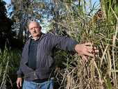 ELDERLY residents in a Tweed Heads townhouse say they are fed up with out-of-control grass and trees on a neighbouring vacant block.