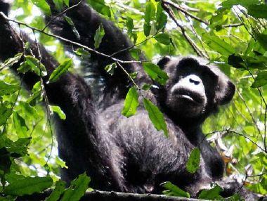 CLOSE ENCOUNTERS: The chimpanzees' mating ritual is enough to make you blush.