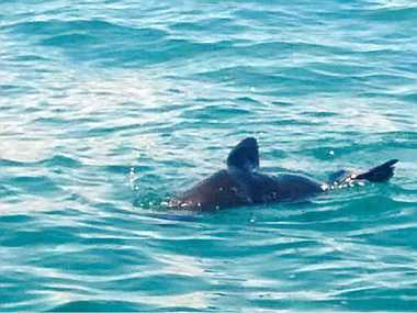SHOW TIME: Narangba resident Kim Hiscox was surprised to see a seal playing in Moreton Bay.
