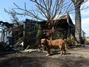 A SHARON couple has credited their dog with saving their lives, giving them time to escape before their house erupted into flames.