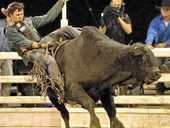 ACCORDING to Rockhampton's Peter Peirano, the Rural Weekly PBR Live Series is one of the best nights of entertainment available.