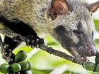 A $52,000 tin of caviar, $2000 in-flight meals, and $706 for a single cup of civet poo coffee – and you thought buying all-organic was steep.