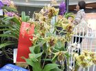 Check out the orchids on display at Caneland Central.
