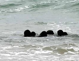Rare chance to glimpse steam ship wreck at Lighthouse Beach