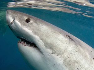 Another shark attack has occurred in NSW.
