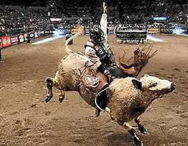 Mackay bull ride to be televised in Australia, overseas