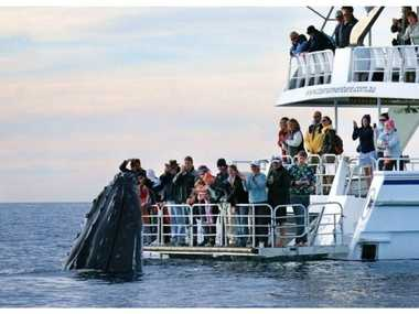 Tourists come face to face with a curious humpback whale aboard the Tasman Venture at Hervey Bay.
