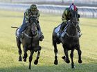 Horse Racing: Dare To Dream at Ballina Cup