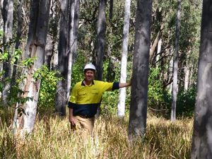 Forestry consultant Stewart Tutton says plantation timber still has a role to play in agriculture, provided lessons from the past are taken into account. Photo Contributed