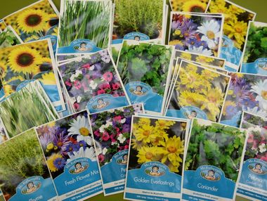 Daily Mercury Seeds Promotion. Photo Lee Constable / Daily Mercury