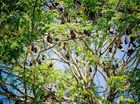 A SECTION of natural forest in Mooloolaba has been cut down because of five written complaints and a petition signed by 27 people against flying foxes.