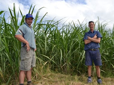 YOUNG CANEFARMERS: From left: Danny Lickiss of Riley's Hill and Martin Walsh of Woodburn are well below the average age of sugarcane farmers which is currently at 64 years old. Photo Samantha Elley / Rural Weekly