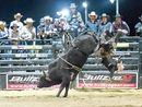 THE Professional Bull Riders (PBR) return to Bundaberg on Saturday, September 26, for the Gulf Western Oil PBR Super Bull.