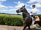 Spatha ridden by Samantha Polo won the Lismore Workers Club Rousillon Handicap. Photo Cathy Adams / The Northern Star