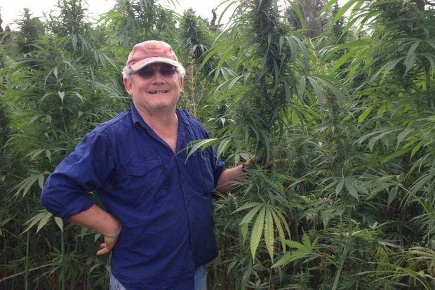 Australian and international hemp consultant John Muir in hemp crop.