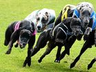 DOGS ARE BARKING: The crisis in the greyhound racing industry could have been avoided if those in charge had taken action years ago, says Warren Kempshall.