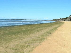 Council starts to clean up the algae washed up on beaches