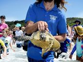 AFTER eight months of rehabilitation, Ballina Seabird Rescue volunteers couldn't have picked a more perfect day to release Penny back into the ocean.
