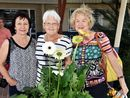 Hervey Bay Orchid Society's Annual flower show impressed guests over the weekend of October 3 and 4.