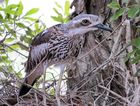 Council urges caution after second endangered bird killed in weeks