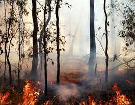 Split Yard Creek bushfire