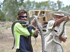 GRANDMOTHER Joyce Miller's nightmares came true when three 20kg, three-metre-long carpet snakes were pulled out of her roof.