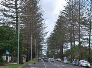 Byron Bay's stately Norfolk Pines face the chop