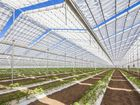 "Young Sang & Co's 4.3ha ""Brella Fields"" greenhouse, the first of its kind in Australia"