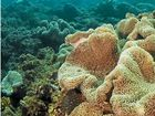 REEFS off the Sunshine Coast have been compared to some of the healthiest in the Caribbean by an organisation which monitors reef health.