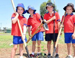 Planting regime to benefit Yuleba town