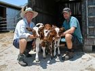 Triplet calves shock Gladfield valley dairy farmers